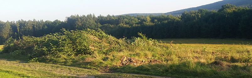 vylesnění a kácení náletových dřevin